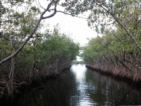 Captain Jack's Airboat Tours : One of the water paths we went on