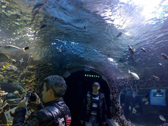 Bergen Aquarium - Foto di Bergen Aquarium, Bergen - TripAdvisor