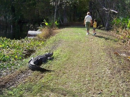 CREW Land & Water Trust - Bird Rookery Swamp Trails: She likes the sun!