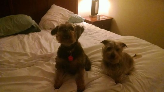 Hampton Inn Salisbury: Lily and Fez can't say enough good things about their stay here!