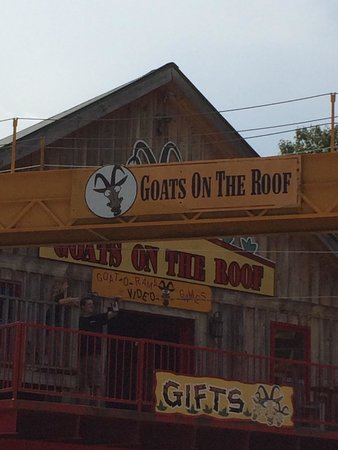 Goats on the Roof: Haven't been here since 2008, but goats are still on the roof!!! Their mothership will be back i