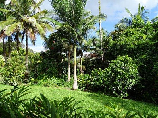 Lava Tree Tropic Inn : Tropic Inn Garden