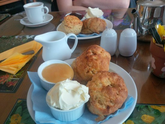 Marwood Hill Gardens: Sumptuous Ginger cream tea with Honey