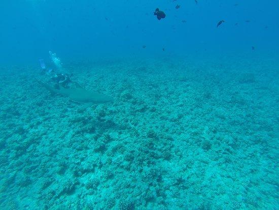 Diveasy: Shark