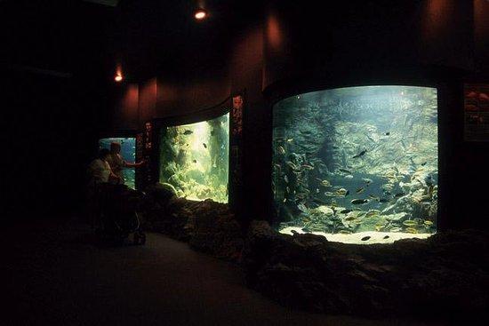 Wildlife World Zoo and Aquarium: aquarium interior