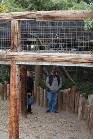 Wildlife World Zoo and Aquarium: leopard exhibit