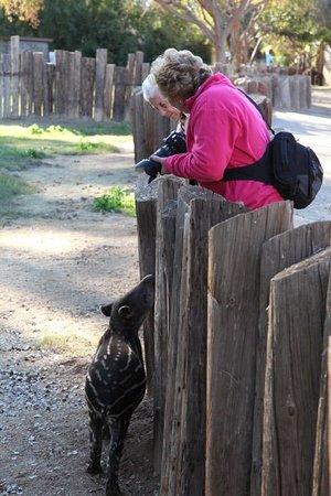 Wildlife World Zoo and Aquarium: visitors with baby tapir