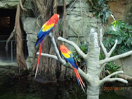 Moody Gardens: Gorgeous Parrots