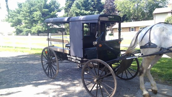 Abe's Buggy Rides: Abes Buggy
