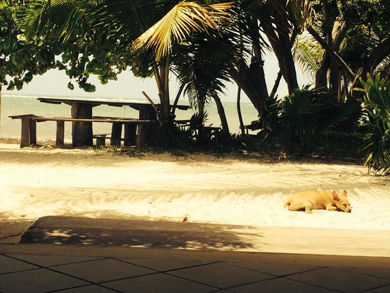 Hotel Maya Luna: Dog Friendly Beach