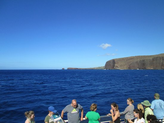 Pacific Whale Foundation: Approaching the snorkel site