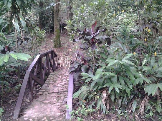 Park Eden Bed & Beakfast: Garden
