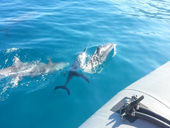 Na Pali Riders: Up close with dolphins