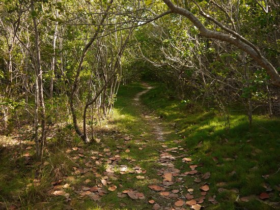 John Pennekamp Coral Reef State Park Campgrounds : Another trail from campground area to the beach