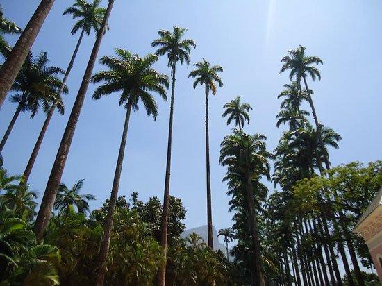 pedras jardim botanico:Casa de pedra – Foto di Botanical Garden (Jardim Botanico), Rio de