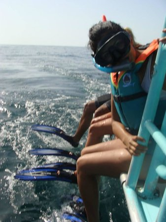 Tribu Hostel: tour para ver al tiburon ballena
