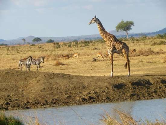 Waterbuck Safaris : Perfect diversity