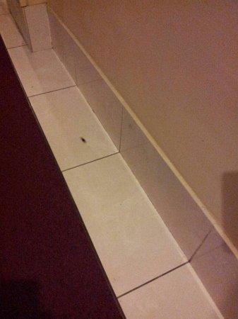 La Siesta Hotel: Hotel la siesta. Cucarachas por el pasillo.