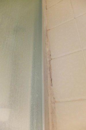 Andrea's Hidden Cottage : Mildew on shower tiles