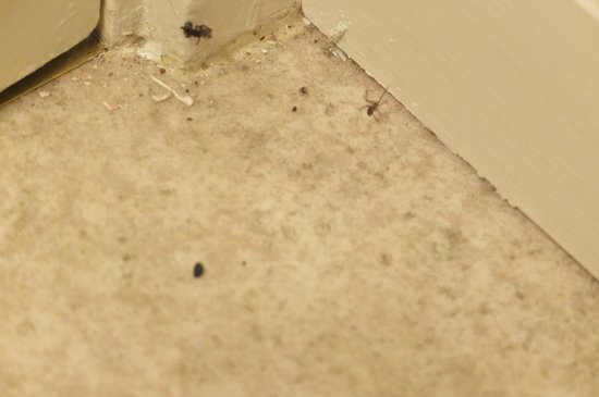 Andrea's Hidden Cottage : Spider no. 3 in bathroom corner.  He's on the right.