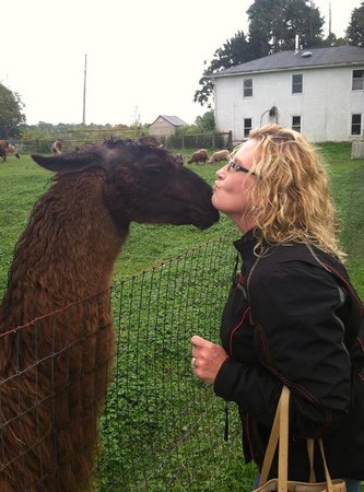 Orchard House Bed and Breakfast : Llama giving me a kiss