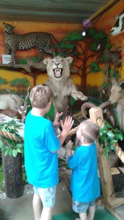 Tropical Ocean Cafe: Part of the Safari Room