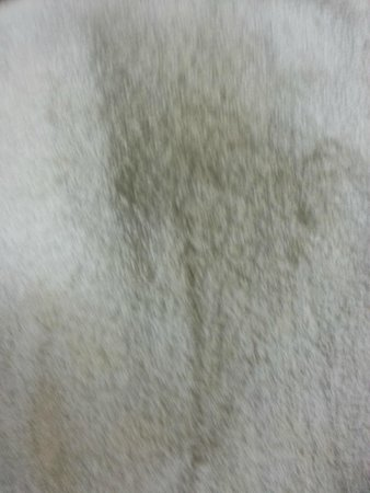 Econo Lodge Garibaldi: Dirt from tables and bathroom floor
