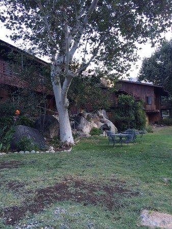 Buckeye Tree Lodge: The garden behind the rooms