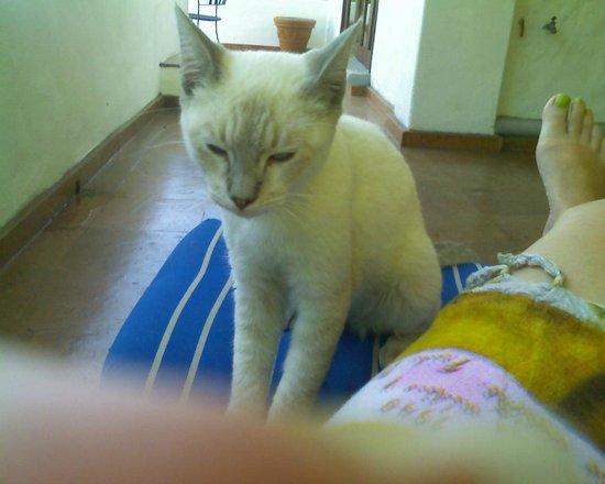Villas Loma Linda: Mexi Azul el gato