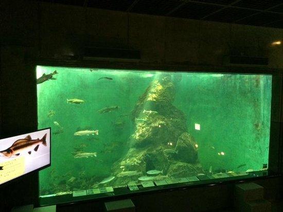 Shibetsu Salmon Park: 水槽