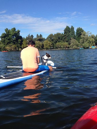 Green Lake Park : even the puppy loves here