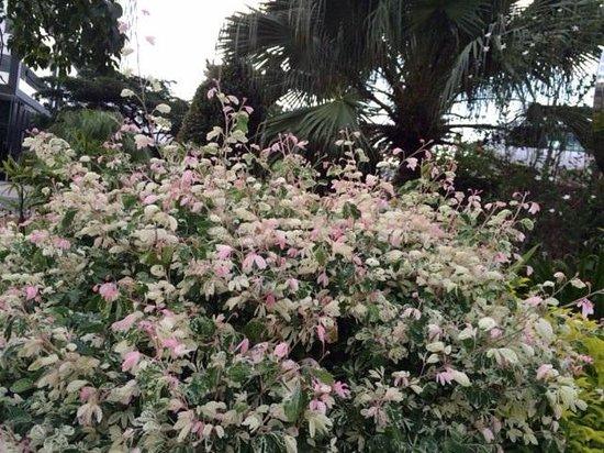 Sabah Oriental Hotel: 玄関前の植栽1