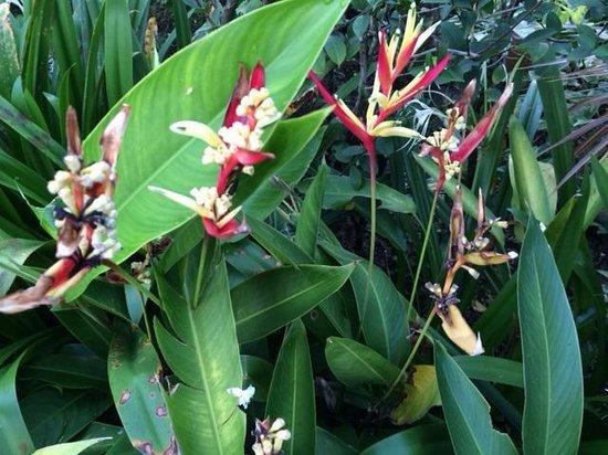 Sabah Oriental Hotel: 玄関前の植栽2