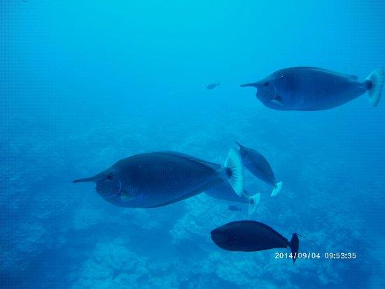 Bubbles Below: Cute fishies everywhere