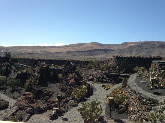 Jardin de Cactus: View from the top