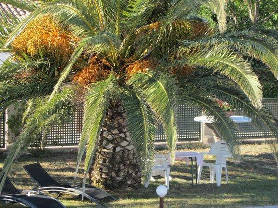 B&B Botarell: Heel mooie tuin