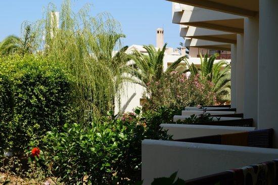Santa Marina Beach Hotel: Ogród