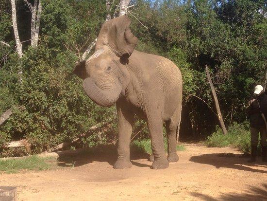 Elephant Sanctuary: Lovely animal