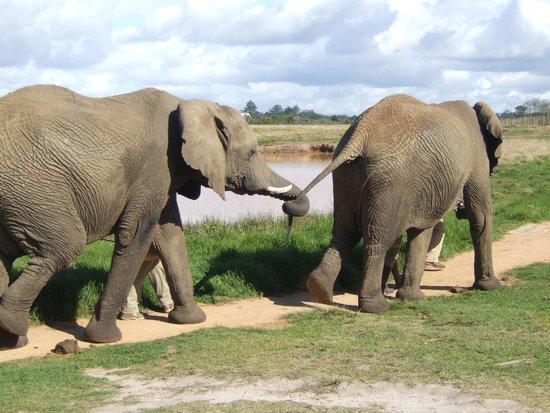Elephant Sanctuary: More walkies