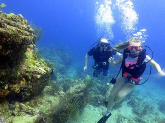 Dockyard Divers: What an adventure