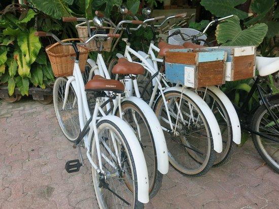 Hotel La Semilla: La Semilla bikes