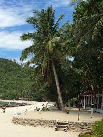 Bottle Beach: Beach Tree