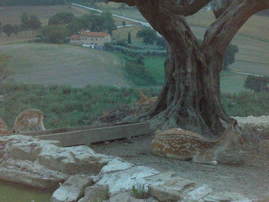 Agriturismo il Rosciolo : natura pura
