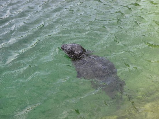 Seehundstation Friedrichskoog: foca
