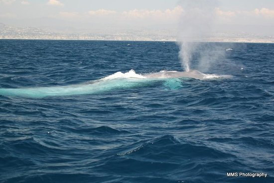 Dana Point, CA: Blue Whale!!