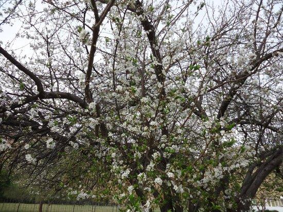 De Oude Meul: beautiful blooms
