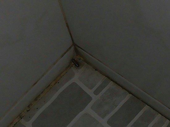 Asia Divers Resort : Scarafaggio in bagno (anche se sinceramente era il meno)