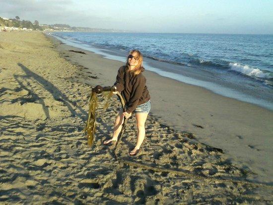 Capitola Beach: Seaweed Monster