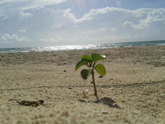 Luv Tulum: Little baby plant alone on the beach