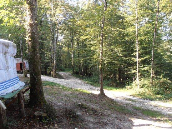 Yourte and Spa: Le cadre de la forêt